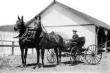 Reginald Parsons in carriage at Hillcrest Orchard